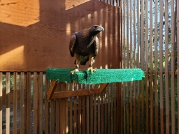 Example of Eagle Perches 2019-11-02